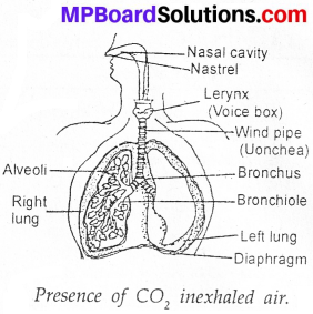 MP Board Class 7th Science Solutions Chapter 10 Respiration in Organisms image 9