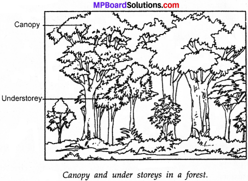 MP Board Class 7th Science Solutions Chapter 17 Forests Our Lifeline img 3
