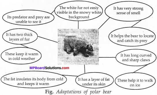 MP Board Class 7th Science Solutions Chapter 7 Weather, Climate and Adaptations of Animals of Climate img-7