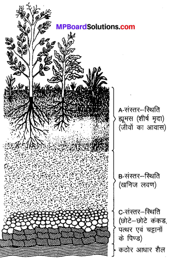 MP Board Class 7th Science Solutions Chapter 9 मृदा 1