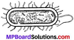 MP Board Class 8th Maths Solutions Chapter 13 सीधा और प्रतिलोम समानुपात Ex 13.1 img-5