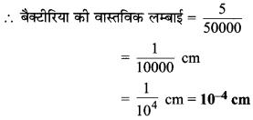 MP Board Class 8th Maths Solutions Chapter 13 सीधा और प्रतिलोम समानुपात Ex 13.1 img-6