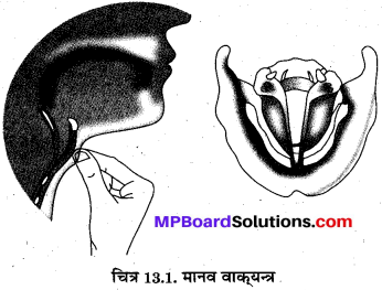 MP Board Class 8th Science Solutions Chapter 13 ध्वनि 4