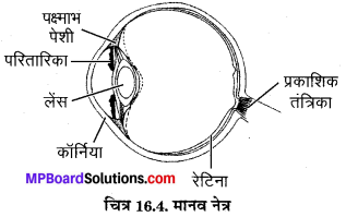MP Board Class 8th Science Solutions Chapter 16 प्रकाश 5