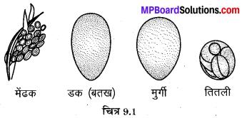 MP Board Class 8th Science Solutions Chapter 9 जंतुओं में जनन 1