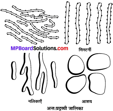 MP Board Class 9th Science Solutions Chapter 5 जीवन की मौलिक इकाई image 6