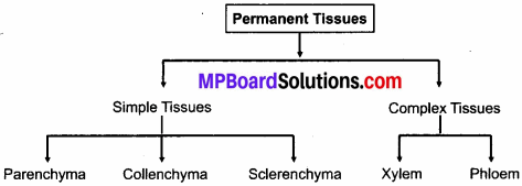 MP Board Class 9th Science Solutions Chapter 6 Tissues 7