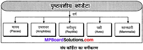 MP Board Class 9th Science Solutions Chapter 7 जीवों में विविधता image 6