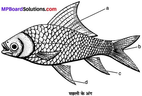 MP Board Class 9th Science Solutions Chapter 7 जीवों में विविधता image 7