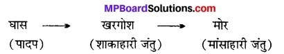 MP Board Class 12th Biology Solutions Chapter 14 पारितंत्र 1