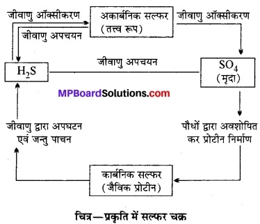 MP Board Class 12th Biology Solutions Chapter 14 पारितंत्र 13