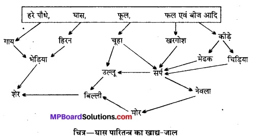 MP Board Class 12th Biology Solutions Chapter 14 पारितंत्र 14