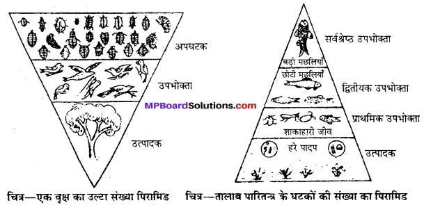 MP Board Class 12th Biology Solutions Chapter 14 पारितंत्र 16