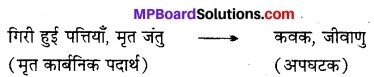 MP Board Class 12th Biology Solutions Chapter 14 पारितंत्र 2