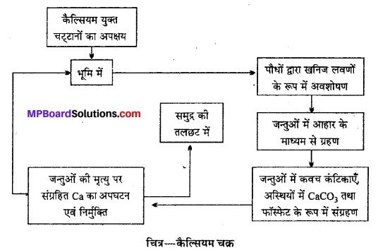 MP Board Class 12th Biology Solutions Chapter 14 पारितंत्र 20