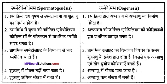 MP Board Class 12th Biology Solutions Chapter 3 मानव जनन 10