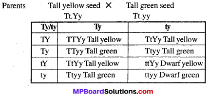 MP Board Class 12th Biology Solutions Chapter 5 Principles of Inheritance and Variation 8