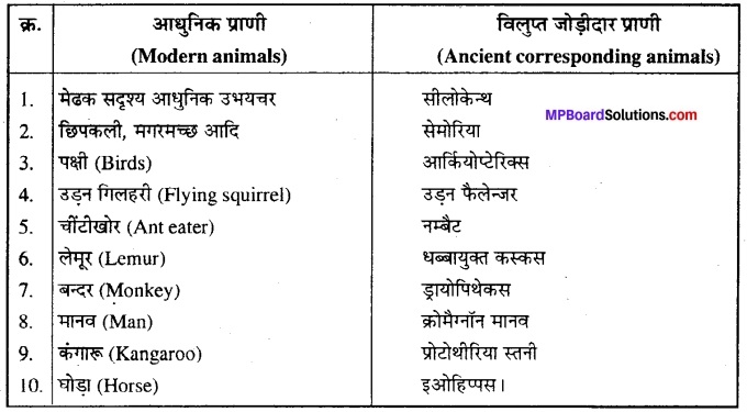 MP Board Class 12th Biology Solutions Chapter 7 विकास 1
