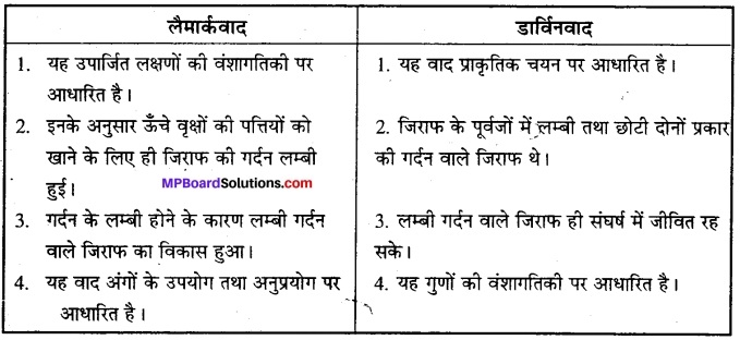 MP Board Class 12th Biology Solutions Chapter 7 विकास 11