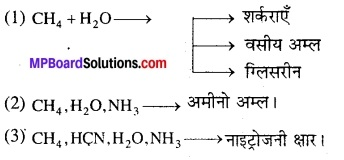 MP Board Class 12th Biology Solutions Chapter 7 विकास 13