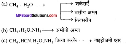 MP Board Class 12th Biology Solutions Chapter 7 विकास 14