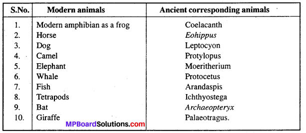 MP Board Class 12th Biology Solutions Chapter 7 Evolution 1