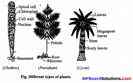 MP Board Class 12th Biology Solutions Chapter 7 Evolution 2