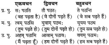 MP Board Class 6th Sanskrit व्याकरण-खण्डः 31
