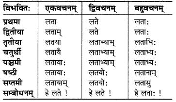 MP Board Class 6th Sanskrit व्याकरण-खण्डः 5