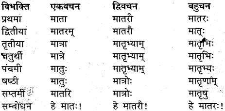 MP Board Class 9th Sanskrit व्याकरण शब्द रूप img-17